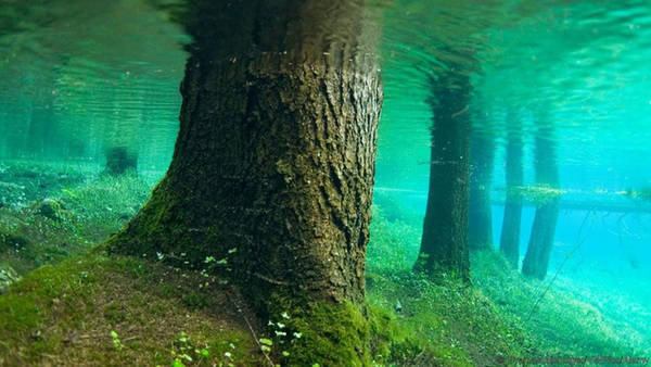 Hồ Gruener See ở Tragoess (Áo) trở nên đặc biệt khi mùa hè đến. Toàn bộ khu rừng gồm cây cối, lối đi bộ, băng ghế và cây cầu sẽ chìm dưới nước, tạo nên một thế giới kỳ ảo lôi cuốn du khách. Hoạt động yêu thích của du khách khi đến đây là lặn. Ảnh: Thomas Aichinger/VWPics/Alamy