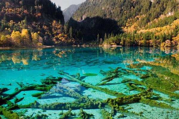 Cửu Trại Câu nằm ở tỉnh Tứ Xuyên, Trung Quốc, là một địa điểm có sức hấp dẫn khó cưỡng lại của du khách. Mặt hồ nước trong vắt, nhìn thấy đáy được bao quanh bởi những ngọn núi cao và cánh rừng xanh mát khiến nhiều người cảm giác đây giống như một nơi không có thật trên trái đất. Ảnh: Orth.
