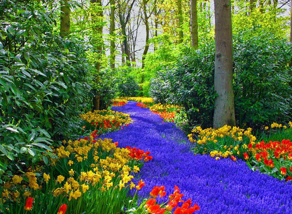 Vườn Keukenhof nằm ở thị trấn Lisse đẹp như tranh vẽ, chỉ cách Amsterdam (Hà Lan) một giờ đi tàu, được biết đến như một trong những khu vườn đẹp nhất thế giới, với hơn 7 triệu cây hoa cùng nhau khoe sắc. Ảnh: Nyobain