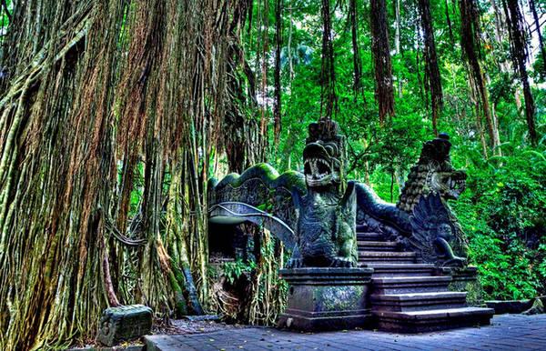 Rừng Khỉ Ubud nằm ở Bali, Indonesia được đánh giá là một khu rừng mang cả vẻ đẹp thiên nhiên và văn hóa. Đây không chỉ là nhà của hơn 600 con khỉ, mà còn có các đền thờ Hindu cổ xưa có từ năm 1350. Ảnh: Terraceatkuta.