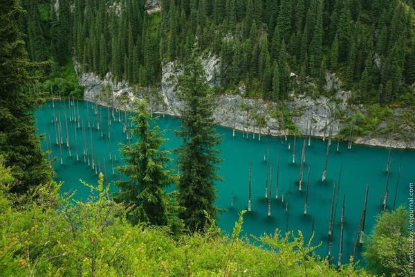 Đây là hình ảnh của hồ Kaindy, nằm trong rừng Sunken (Kazakhstan). Hồ được hình thành sau một trận động đất vào năm 1911. Bên trong lòng hồ là những cây vân sam mọc thẳng đứng, từ xa giống như những ngọn giáo khổng lồ. Ảnh: Aboutkazakhstan.