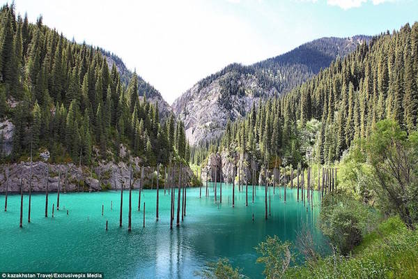 Hiếm nơi nào trên thế giới có hồ nước độc đáo như ở Kazakhstan. Hồ Kaindy, nằm trong dãy núi Tian Shan, cách thành phố Almaty 130 km, được hình thành từ một vụ sạt lở sau trận động đất kinh hoàng năm 1911. Nơi đây nổi tiếng với hàng loạt cây vân sam mọc ngược dưới lòng hồ, tạo thành khu rừng chìm có một không hai.