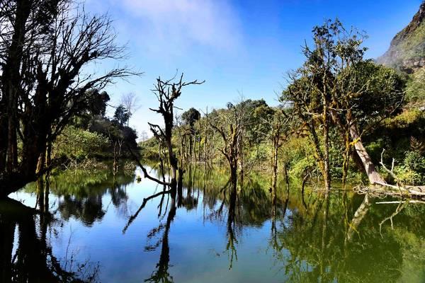 Lưng chừng đường lên đỉnh, thỉnh thoảng ta lại bắt gặp những hồ nước với những thân cây gỗ lũa hình thù kỳ dị.