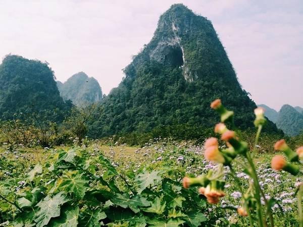 """""""Tuyệt tình cốc"""" ở Cao Bằng còn có điểm đặc biệt là """"núi thủng"""", một ngọn núi có lỗ hổng lớn, nằm giữa thung lũng hoa dại."""