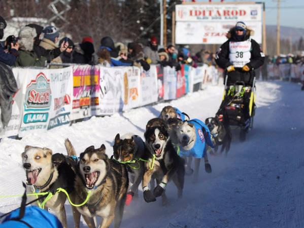 Nếu bạn đến Alaska vào tháng 3, chớ bỏ lỡ cuộc đua chó săn Iditarod Trail Sled Dog Race. Lễ khai mạc diễn ra vào tháng Ba ở thành phố Anchorage.