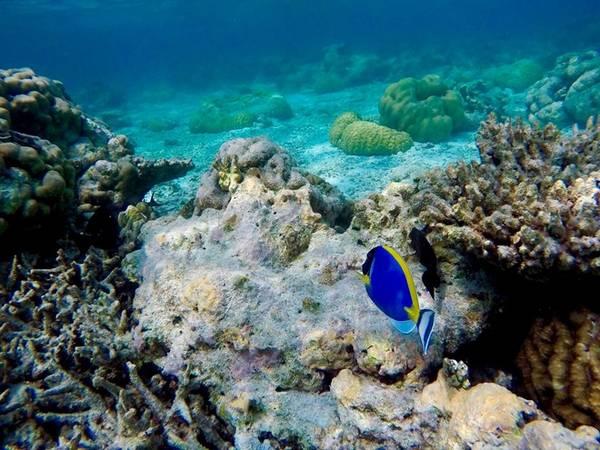 Lặn biển là một dịch vụ rất thú vị ở Maldives.