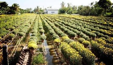 Vườn hoa Tân Quý Đông, vựa hoa lớn nhất miền Tây Nam Bộ. Ảnh: An Huỳnh.