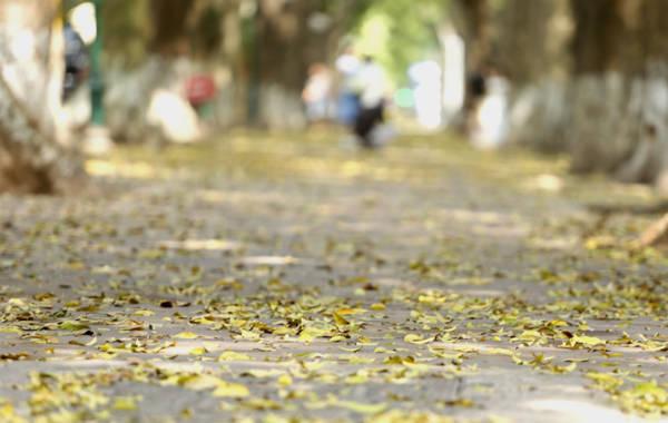 Đi trên vỉa hè thoáng đãng trải thảm lá vàng, những cơn gió thoảng như một bản tình ca say đắm lòng người.