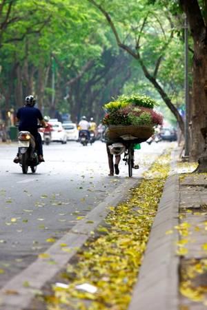 Một gánh hàng hoa trên phố cũng đủ khiến bạn quên cả lối về.