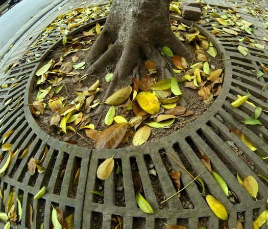 Nếu đã từng sống ở Hà Nội, bắt gặp Hà Nội vào mùa thay lá, thì bạn sẽ chẳng thể quên được vẻ nên thơ của những thảm lá vàng trong thời khắc chuyển giao ngắn ngủi này.