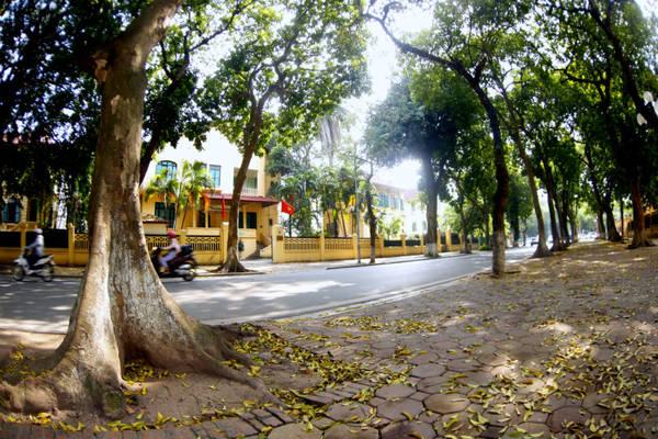 Thêm vào đó, nét cổ kính của những ngôi biệt thự hai bên đường dường như càng tạo nên một vẻ đẹp khác biệt chỉ có ở phố Phan Đình Phùng.