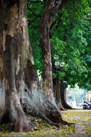 Vẫn góc phố và con đường ấy nhưng cảnh sắc thật đẹp mắt với những chiếc lá vàng, những nhành lộc non mới nhú.