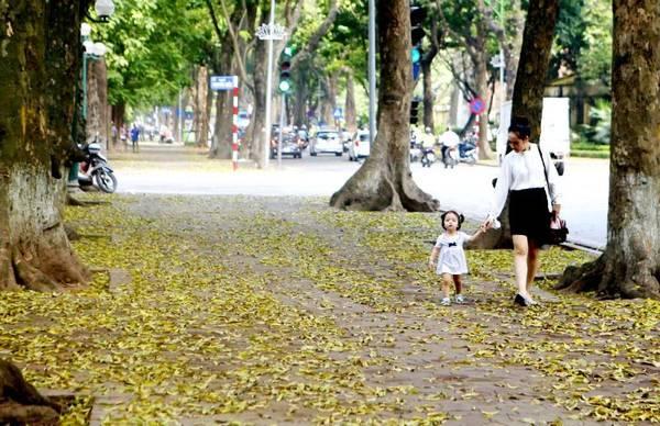 Tháng tư là mùa sấu thay lá, cả con phố này trải lá vàng ruộm dưới chân nhưng phía trên lại xanh mơn mởn màu lá non.