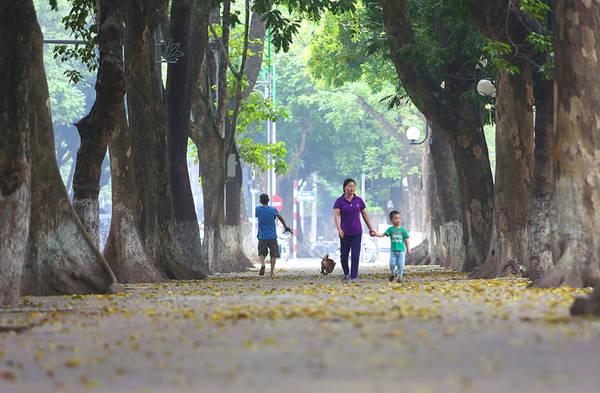 Tuyến đường Phan Đình Phùng nơi có hàng cây cổ thụ rợp bóng mỗi độ tháng 4 về lại xào xạc lá vàng.