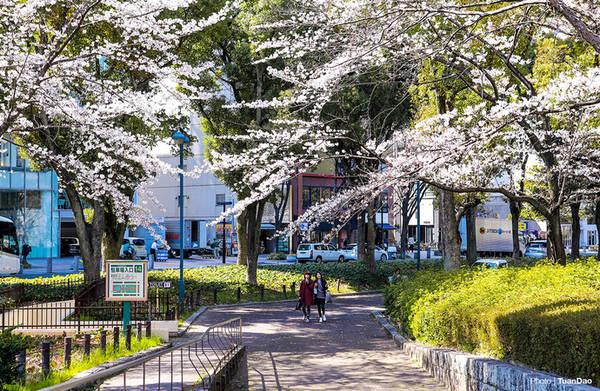 Được mệnh danh là trái tim của Nhật Bản, thành phố Nagoya là đô thị lớn thứ 3, vốn nổi tiếng là tổng hành dinh các hãng nổi tiếng như Toyota, Mitsubishi, gốm Noritake, mỹ phẩm Menard… Ngoài ra, Nagoya còn hấp dẫn du khách bởi nguồn tài nguyên thiên nhiên phong phú, có nhiều thắng cảnh.