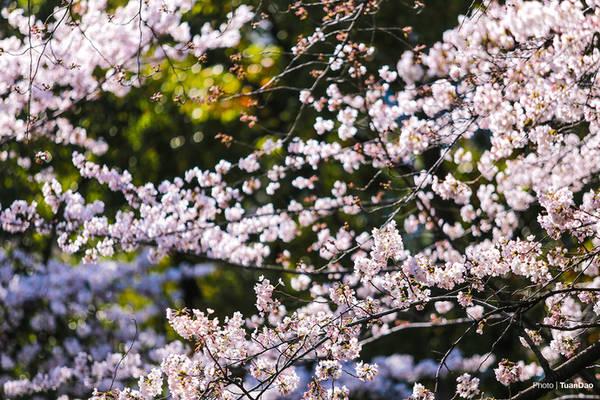 Những bông hoa khoe sắc trong ánh nắng càng làm khung cảnh lung linh hơn.