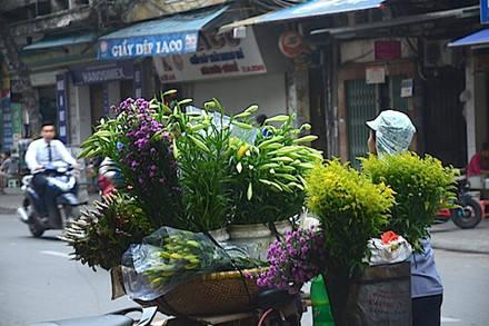 Giá hoa loa kèn năm nay cũng không chênh nhiều so với hằng năm. Giá bán lẻ ờ ngoài dao động từ 30.000 đến 40.000 đồng/bó 10 bông.