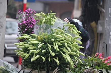 ...hay trên phố Lò Sũ, Lương Văn Can, khắp các ngõ ngách Hà Nội cũng bắt gặp từ rất sớm.