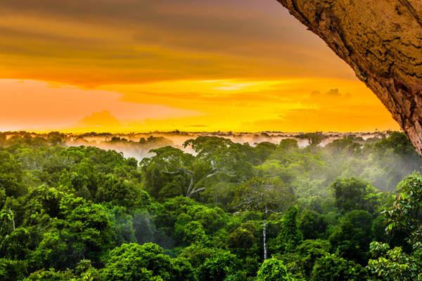 5. Trải dài từ lãnh thổ Barazil, Colombia cho đến Peru, Amazon là một trong những khu rừng rậm nhiệt đới lớn nhất trên thế giới với hơn 300 loài động vật có vú, hơn 1800 loài chim (tương đương với 1/3 loài chim tồn tại trên thế giới).