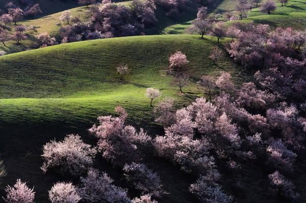 8. Nằm ở dải đất xa xôi hẻo lánh nhất của tỉnh Tứ Xuyên, Trung Quốc là Thung lũng cây mận, một khu rừng rộng lớn trồng toàn cây mận. Cứ mỗi mùa xuân, những bông hoa mận trắng và hồng nhuộm màu cho thung lũng, khiến nơi đây trở thành cảnh tiên của hạ giới.