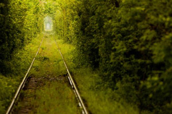 9. Đường ray xe lửa bị bỏ hoang này nằm trong khu rừng cạnh Caransebes, Romania được người dân địa phương và khách du lịch ví von là Đường hầm Tình yêu vì có vẻ đẹp quyến rũ và lãng mạn.