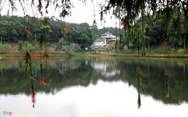 Hoa liễu rũ trông như chiếc lồng đèn buông lững lờ thơ mộng bên bờ hồ Đắk Ke.