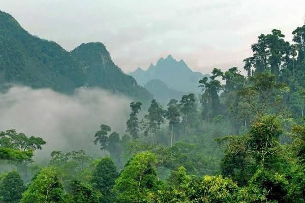 Vườn quốc gia Xuân Sơn điểm dừng chân trong hành trình khám phá đất Tổ. Ảnh: I.T