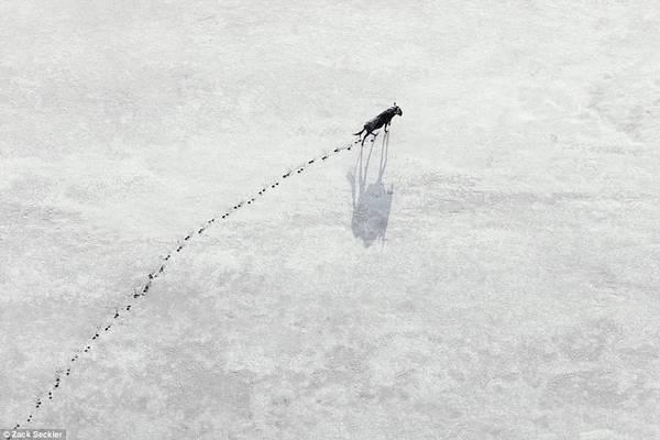 Những bức ảnh từ trên không về thiên nhiên hoang dã ở Nam Phi này của Zack Seckler, nhiếp ảnh gia từng đạt nhiều giải thưởng.