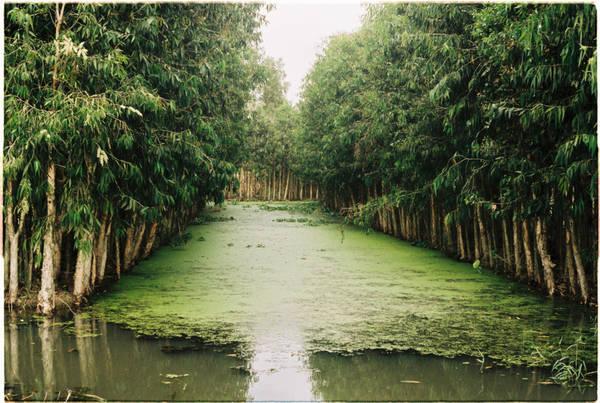 Đường đi Hậu Giang với những mảng nước đóng rêu xanh ngát, bên những hàng cây mọc cao bao quanh. Ở đây, tôi cảm giác như lạc vào một miền cổ tích màu xanh tràn đầy nhựa sống.