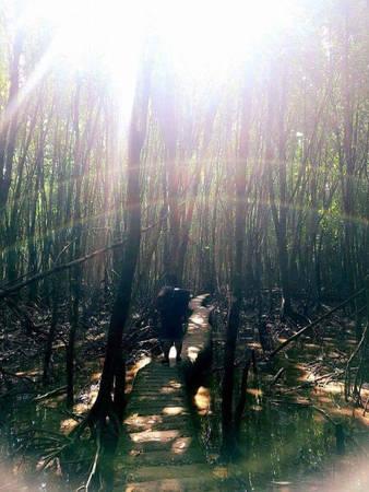 """Bạn sẽ được đi bộ một vòng vành đai ở đất mũi, tận cuối là rừng tràm xanh ngát. Đến đây, đừng bỏ lỡ việc ngắm hoàng hôn và ở homestay """"xịn""""."""
