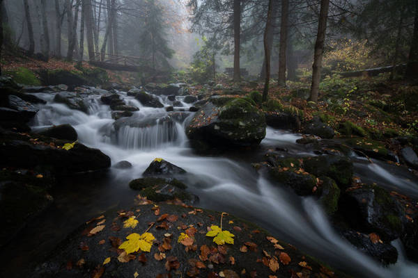 Dòng suối giữa rừng.