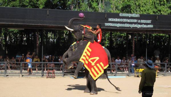 Ngoài dịch vụ nghỉ dưỡng, hồ bơi, nhà hàng, phòng hội thảo, Nongnooch còn có cả sân khấu biểu diễn nghệ thuật, và khu biểu diễn dành cho 42 con voi được thuần dưỡng. Ảnh: Orientalescape.