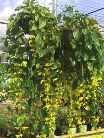 Vườn Nong Nooch hàng chục nhìn loại hoa cây cảnh, được đem về từ nhiều quốc gia trên thế giới. Rất nhiều trong đó là thực vật quý hiếm. Ảnh: Orientalescape.