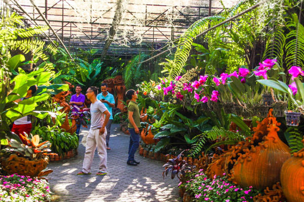 Đặc biệt, Nong Nooch cũng được coi như thiên đường dành cho những người yêu lan, bởi nơi đây tập trung hàng trăm giống hoa lan. Ảnh: Nongnoochtropicalgarden.