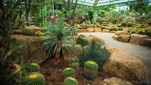 Một khu vực trồng xương rồng. Ảnh: Orientalescape.