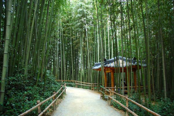 20. Rừng tre Damyang (tỉnh Jeollanamdo): Bạn sẽ lạc vào thế giới của thanh tĩnh, được bao bọc bởi màu xanh mát của rừng tre bạt ngàn. Bên cạnh đó, bạn cũng có cơ hội để tham quan một số kiến trúc Hanok truyền thống ở nơi đây. Ảnh: Onedaykorea.