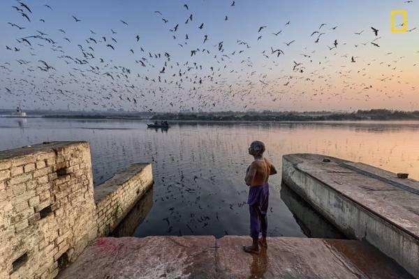 Một người đàn ông ở Delhi vừa tắm sông Yamuna vừa ngắm nhìn bầy chim trời bay lượn. Yamuna là một trong những con sông thiêng liêng nhất ở Ấn Độ, nhưng cũng là một trong những khu vực bị ô nhiễm nặng nhất - Ảnh: Yogesh Gupta