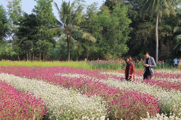 Kết quả hình ảnh cho vườn hoa mãn đình hồng