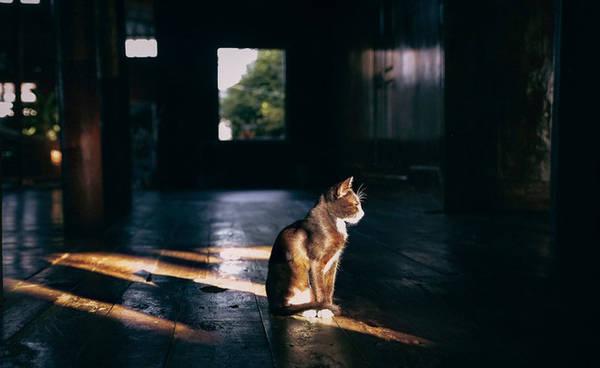 Trong khi mọi người vội vã với sinh hoạt thường ngày của cuộc sống, chú mèo lại lặng lẽ phơi nắng trong khuôn viên một ngôi chùa.