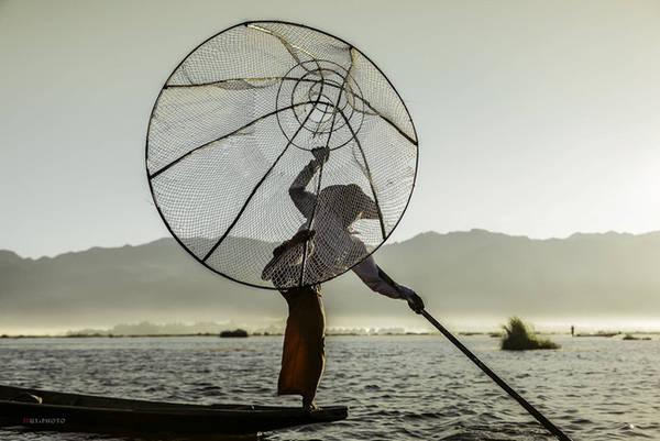 Họ kẹp chân còn lại vào một chiếc lồng. Chiếc lồng này sẽ được giơ lên cao và hạ xuống nước. Một màng lưới mỏng quanh lồng giúp cá không thể thoát ra ngoài. Vài người đập mạnh mái chèo xuống nước để xua đàn cá đến những hàng lưới giăng sẵn.