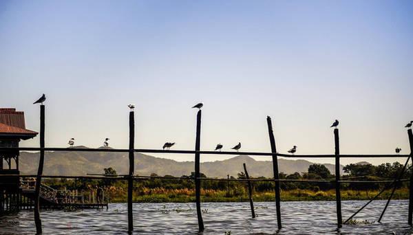 Những chú chim mòng biển...