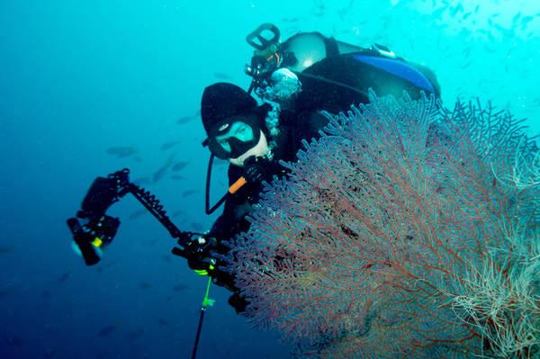 Quần đảo Raja Ampat Nằm ngoài khơi bờ biển Papua, quần đảo Raja Ampat được nhiều người bình chọn là một trong những địa điểm lặn biển lý tưởng nhất thế giới. Với những rạn san hô nguyên sinh là nơi cư trú của hàng ngàn loài cá, du khách sẽ dễ dàng bắt gặp sên biển, cá đuối Manta, và cá mập Epaulette, cùng nhiều loài khác. Có rất nhiều khu nghỉ dưỡng và tàu lặn cho du khách lựa chọn nơi nghỉ ngơi.
