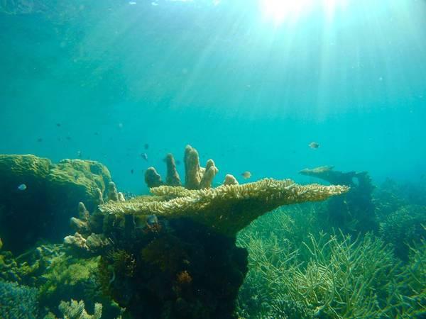 San hô dưới đáy Quin Reef.