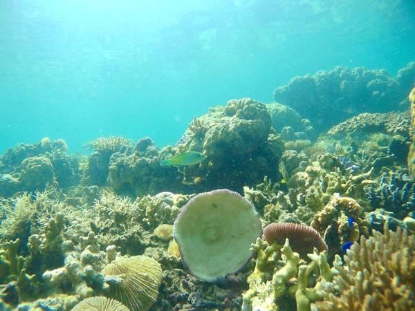 Cá và san hô hình cái bát.