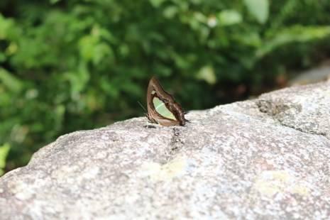 Một con bướm chọn cho mình vị trí yên tĩnh trên mỏm đá.