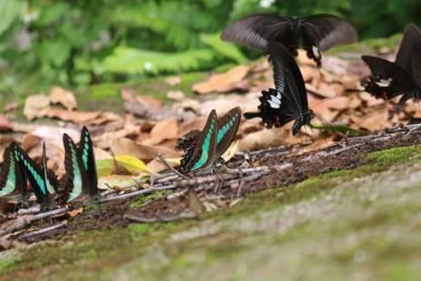 Nhiều du khách khi nhìn thấy các loài bướm này đã tỏ ra rất thích thú và ngạc nhiên.
