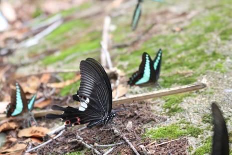 Một loài bướm có đôi cánh rất đặc sắc.