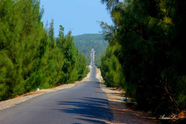 Rời bãi biển, xuôi theo con đường chạy giữa rừng dương, tôi đến làng chài Từ Nham.