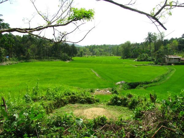 Vẻ đẹp xanh mướt từ những hàng cây, vũng ruộng mơn mởn cùng những ngôi nhà cổ mang kiến trúc thuần Việt là điều khiến đôi chân du khách không muốn rời Lộc Yên. Ảnh: Khánh Hiền.