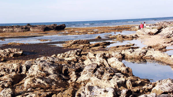 Thủy triều lùi đến đâu thì đá nham thạch lại lùi ra đến đó - Ảnh: Trần Mai